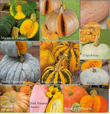 20 seminte -10soiuri dovleci culori deosebite-pt. copt, fiert, prajit