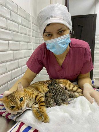 Ветеринарная клиника круглосуточно