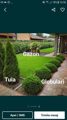 amenajăm spați verzi de la A la Z plante ornamentale gazon rulou etc