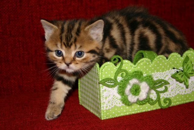 Лапочки котята,прямо девочки-девочки