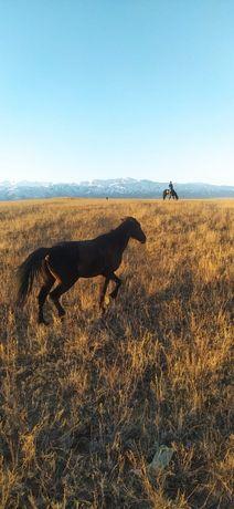 Конь, лошадь, 7 лет