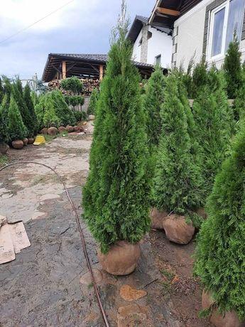 Plante ornamentale pt o grădină de vis