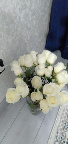 Продам розы белые