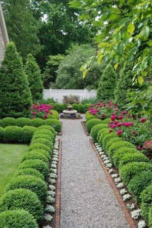 Plante ornamentale tuia etc la cele mai mici preturi