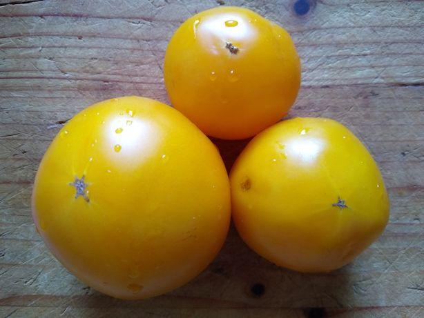 Rosii, tomata galbena