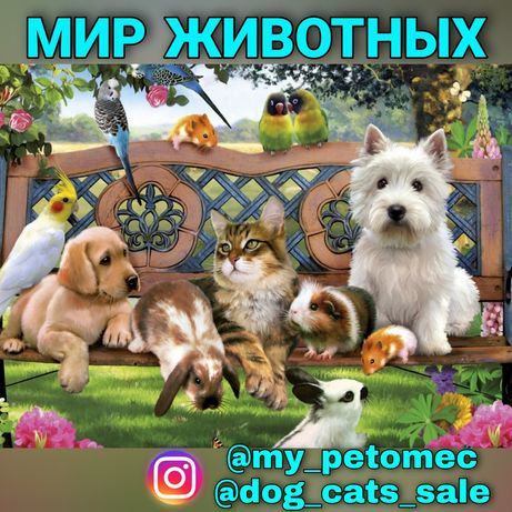 Мир животных инстаграм группа