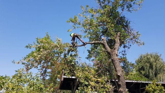 Taieri doborari si toaletari arbori copaci pomi orice dificultate