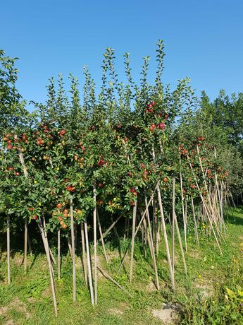 Mere/pere bio diferite soiuri, din livadă proprie și suc de mere