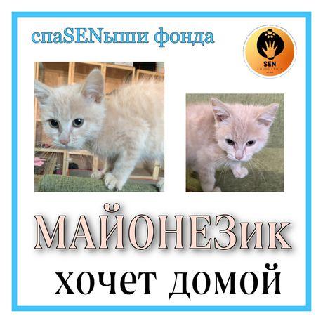 Котенок по имени МАЙОНЕЗ