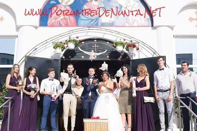 Porumbei albi pentru nunta Constanta