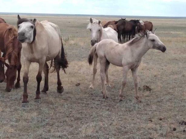 Продам лошадь кобылу с жеребенком