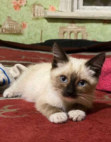 Отдам котёнка-девочку в  добрые руки