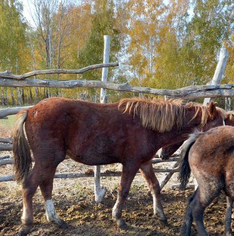 Продам лошадей с табуна
