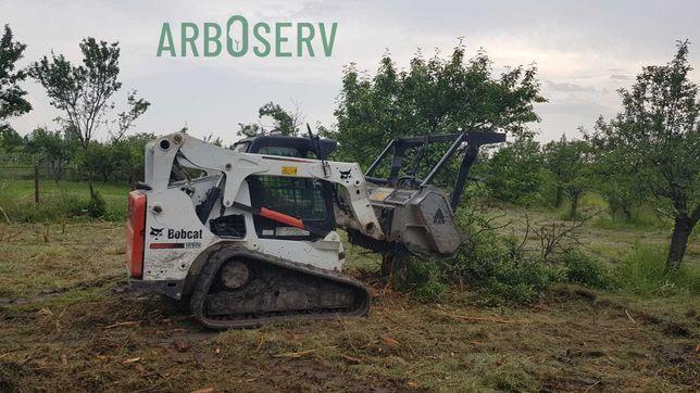 Defrisare livezi - plantatie de pomi / arbusti, defrisare vita de vie