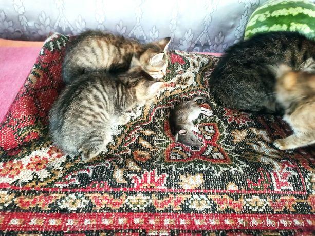 Крысоловы ,2 месяца, один кот и две кошки