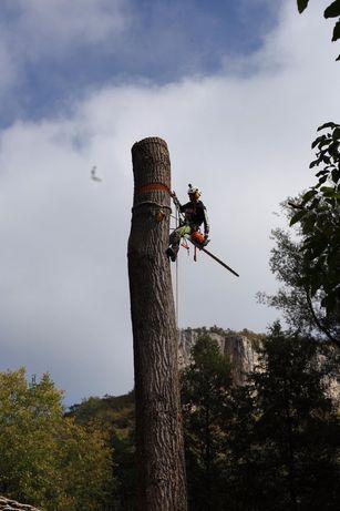 Поваляне, кастрене на опасни дървета, арборист, stihl, рязане, дърво