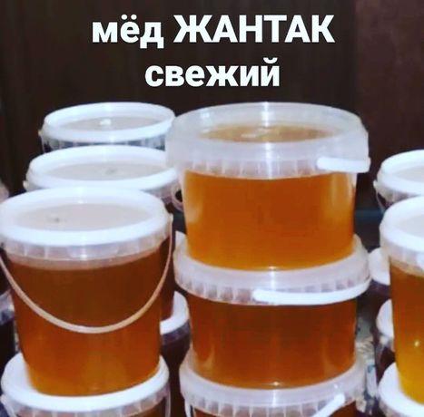 Мёд Жантак