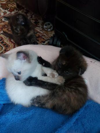 Котята продам чистые  маленькие