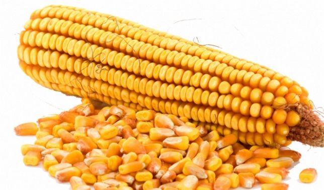 Жүгері Кукуруза