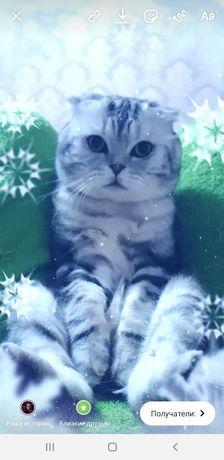 Опытный кот,на вязку.