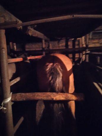 Продам жирных лошадей, бие, байталы.