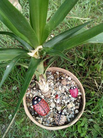 Decorațiuni grădină