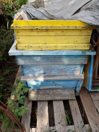 Пчелни кошери стари