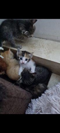 Adoptie 6 pui de pisica
