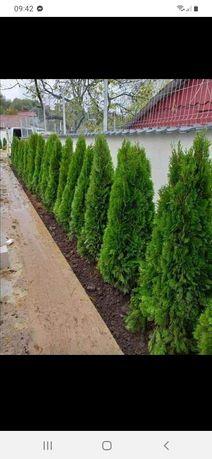 Amenajam gradina Plante ornamentale