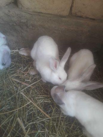 Кролики в количестве