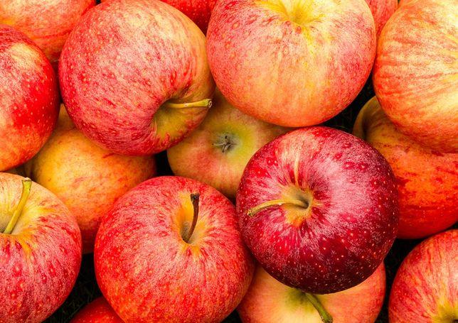 Vând mere pentru țuică și suc