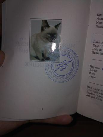 Кот и кошка сиамская парода окрас пойнд
