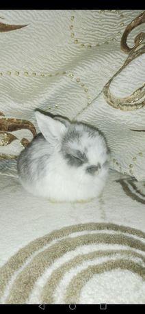 Продам малышей декоративных кроликов