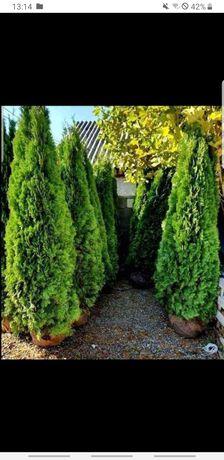 Plante ornamentale pentru o grădină edeală