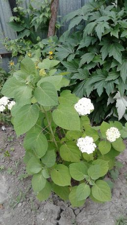 Огромный выбор садовых растений
