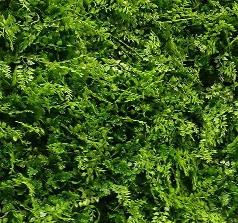 6117 GreenWall small-leaves-gard viu artificial