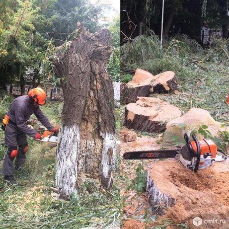 Спил деревьев. Уборка деревьев. Ағаштарды кесу.
