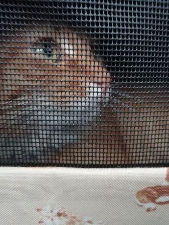 Нашёлся кот