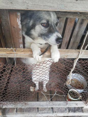 Отдам собаку в добрые руки!