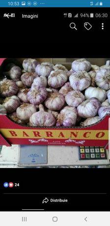 Vand usturoi spaniol alb si rosu la bax de consum si romanesc verde