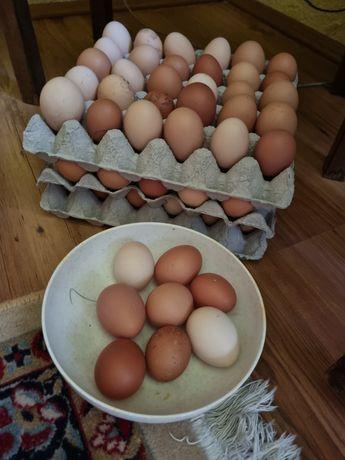 Ouă de casă 100% BIO