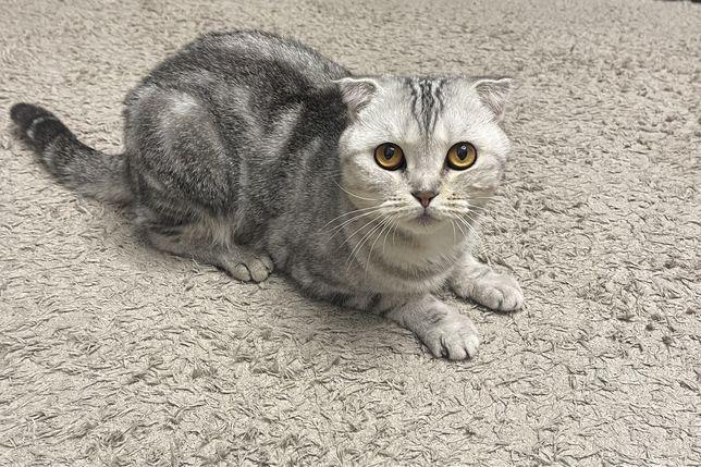 Отдам бесплатно котиков в хорошие руки!!!