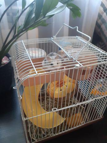 Продам хомячка с клеткой