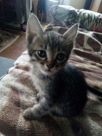 Отдаю котёнка - девочку (бесплатно)