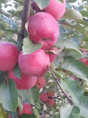 Vând diferite soiuri de mere