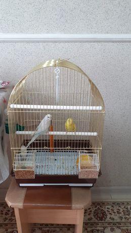 Продаются папугаий