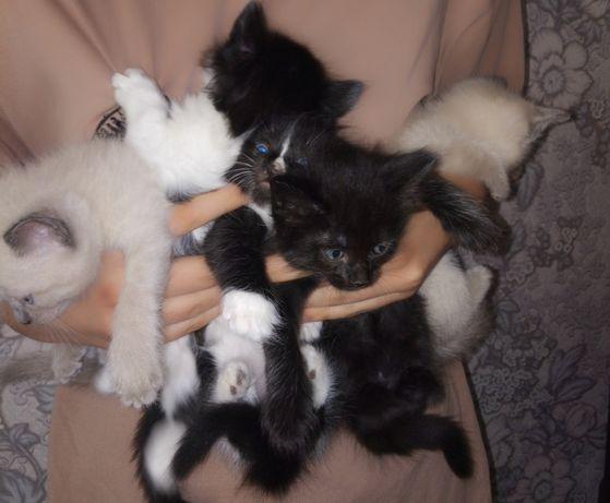 Подарю красивых котят в хорошие руки!