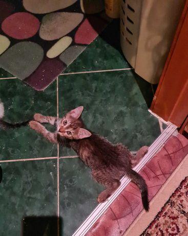 Котята от мамы крысыловки!