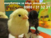 Румънски полуавтоматичен инкубатор за пилета. Инкубатори за яйца с ди