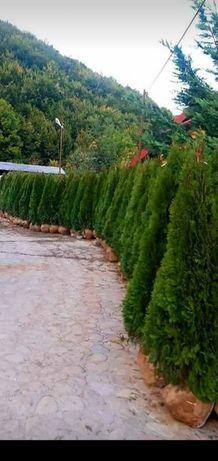 Plante ornamentale diverse speci la cel mai bun preț